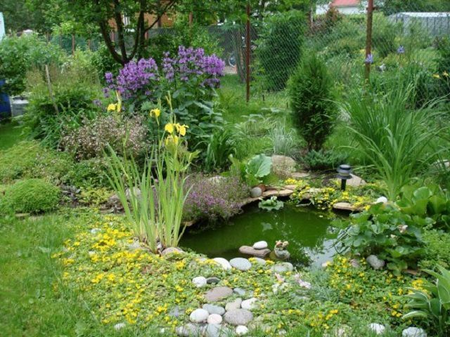 Excellent landscape adorn small artificial ponds