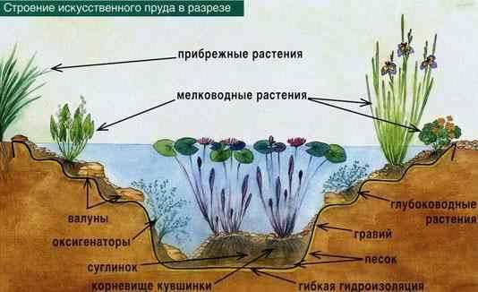 How to make a decorative pond in the garden