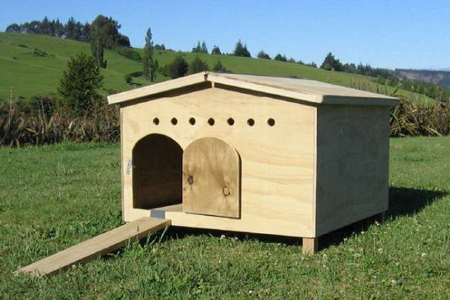 A small house for ducks on wooden legs