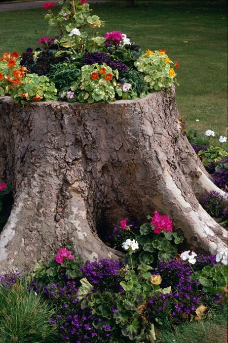 Flower gardens on stumps and trunks of old