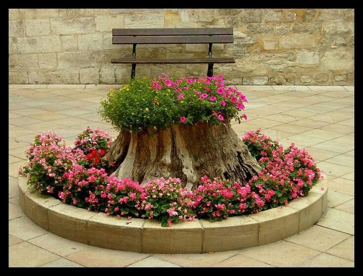 Flowers on the stumps
