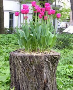 Flowers on old stump