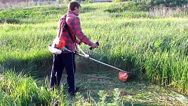 Petrol trimmer is able to cope with dense thickets of stiff grass