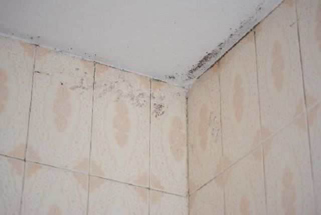 If improperly treated surfaces with moisture it appear inevitable companions - mildew stains