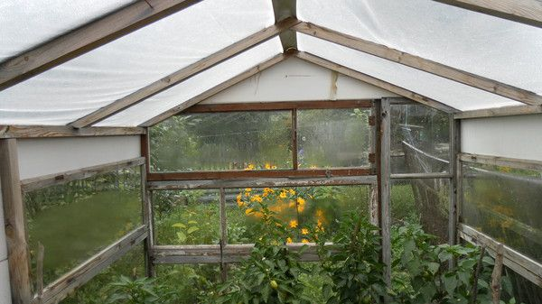 Greenhouse of the frame with a roof made ​​of polyethylene