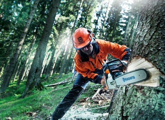 Without chainsaws impossible industrial logging