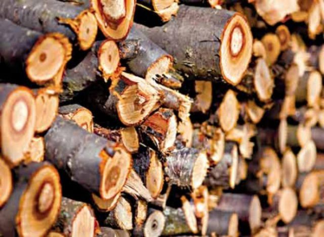 Wood from fruit trees is unwise simply to burn in the stove - they are ideal for smoking or cooking on the coals