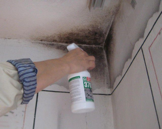 Mould stains are subject to mandatory removal and antiseptic treatment