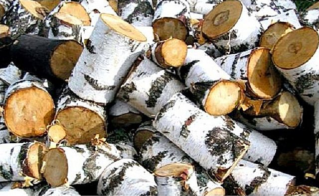 Traditional popular are always in birch firewood
