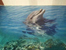 Dolphins - self-leveling floors