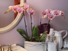 Caring for plants in the bathroom without a window