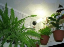 Backlight for plants in the bathroom