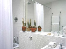 Terms of care for plants in the bathroom without a window
