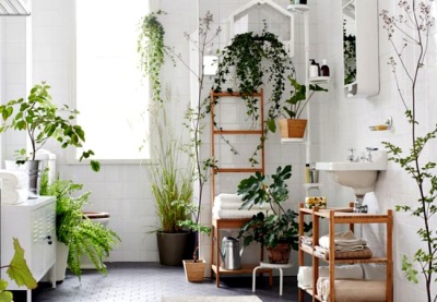 Placing potted flowers and other plants in the bathroom