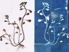 Floral pattern on the tile