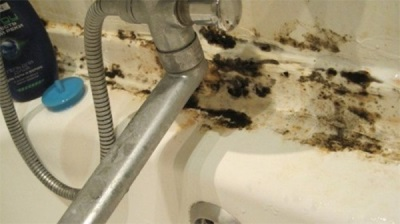 Black fungus in the bathroom
