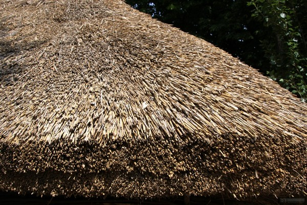 reed roof Photo