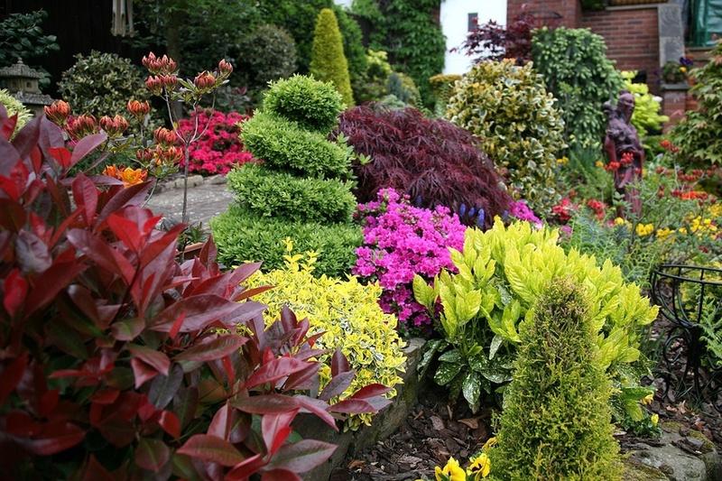 Rboles de hoja perenne del jard n arbustos setos las - Arboles ornamentales para jardin ...