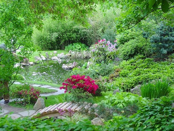 Rboles de hoja perenne del jard n arbustos setos las for Arbustos perennes para jardin