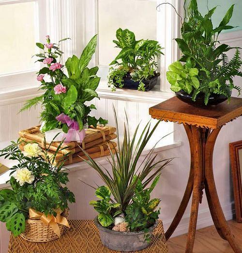 Идеи для цветов в квартире своими руками 62