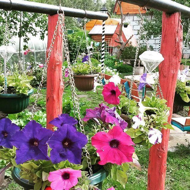 Советы профессионалов по выращиванию петуний 13