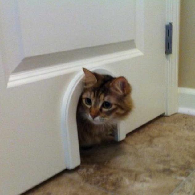 Вход в двери для кошки своими руками 22